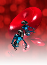 Nanobots and red blood cell