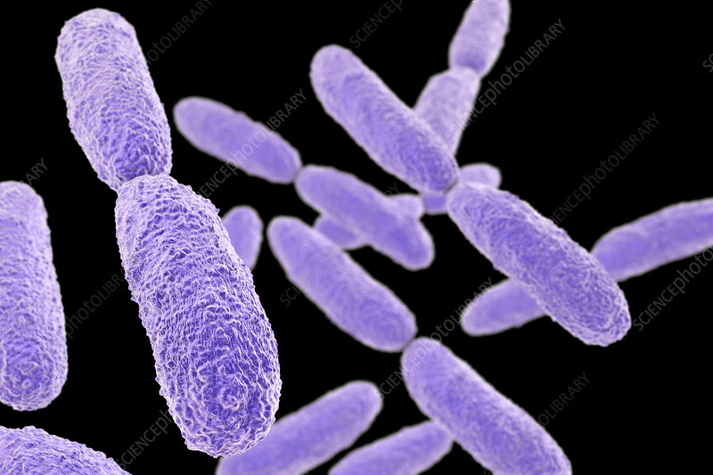 in this article we will discuss Klebsiella pneumonia and its ayurvedic perspective and its treatment