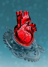 Human heart with metal cogs
