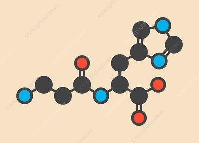 Carnosine food supplement molecule
