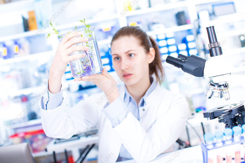 Scientist holding plant in beaker