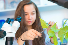 Female biology student cutting leaf from plant