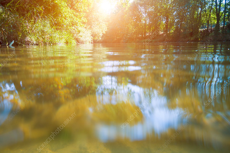 Water surface in forest