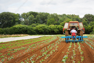 Two men in a tractor towing a cultivator weeding a field