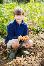 A boy holding potatoes in a vegetable patch
