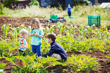 Three children in a vegetable patch