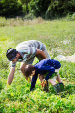 A man and a boy plucking carrots in a vegetable patch