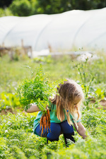 A girl picking carrots in a vegetable patch
