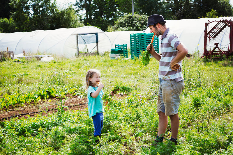 A man and a girl eating freshly harvested raw carrots
