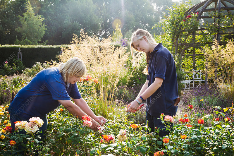 Two female gardeners cutting flowers at Waterperry Gardens