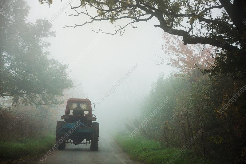 A tractor on a road between hedges in the autumn mist
