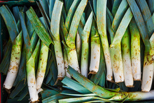 Freshly harvested leeks with white and green leaves