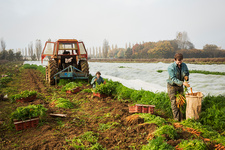 People harvesting autumn vegetables on a small family farm