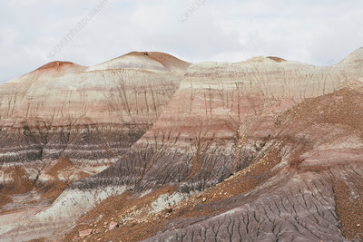 The coloured strata of the Painted Desert rock formations