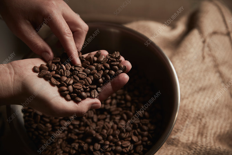 A person holding a handful of fresh roasted coffee beans