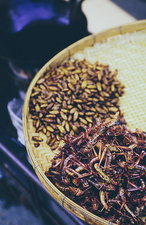 Damnoen Saduak Market, grasshoppers and larva for sale