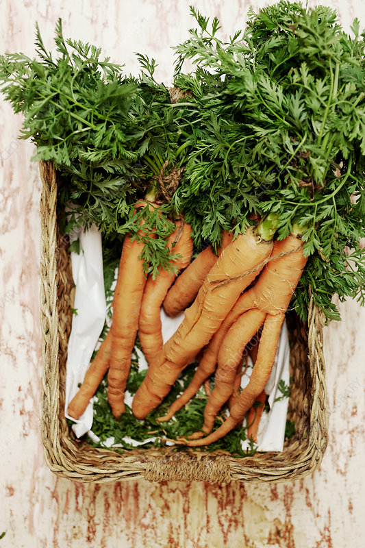 Bundle of carrots in a basket