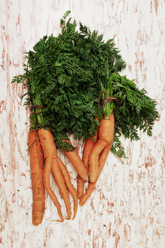 Bundle of carrots on a wooden surface, view from above