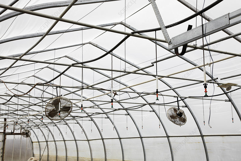 A commercial plant nursery polytunnel with ceiling fans