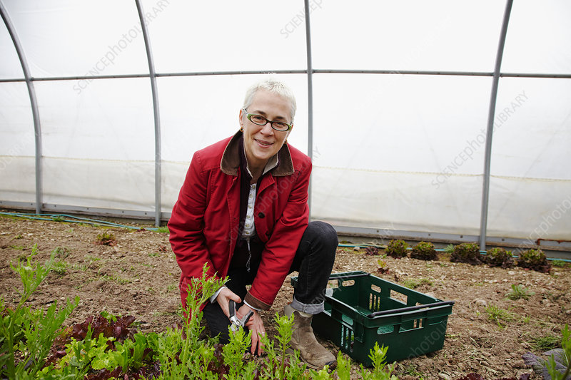 A woman working with plants in a large polytunnel