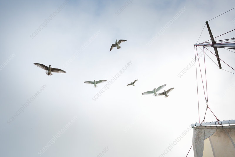 A boat mast and seagulls wheeling above the boat