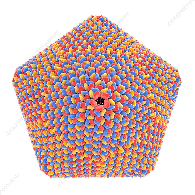 Icosahedral virus capsid, illustration