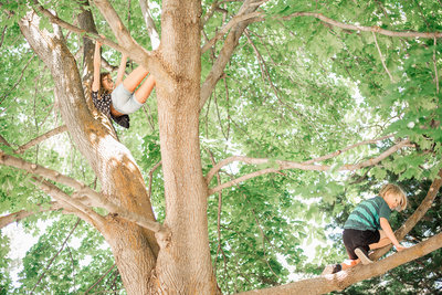 Two children, brother and sister climbing a tree
