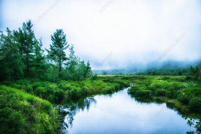 A waterway in the Acadia National Park in mist