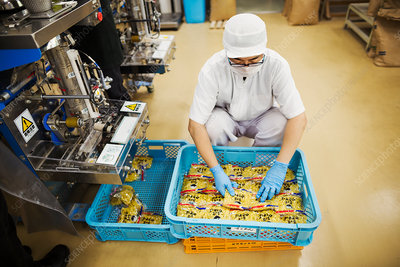 Worker in a factory packing fresh Soba noodles