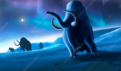 Mammoths and Aurora, illustration