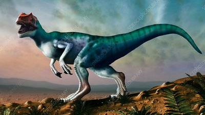 Allosaurus, illustration