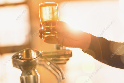 Bartender serving golden pint of beer at beer tap