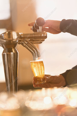 Bartender filling pint glass with beer