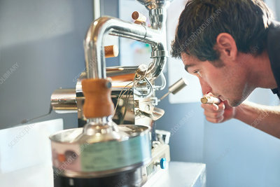 Male coffee roaster smelling, testing coffee