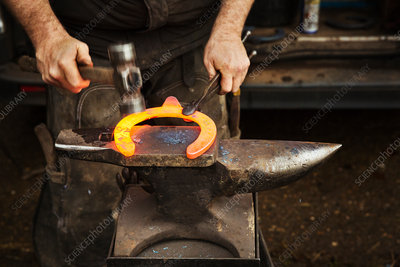 A farrier using tongs and hammer on a metal horseshoe