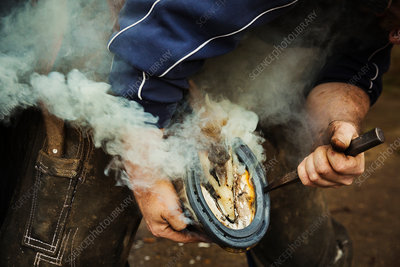 A farrier shoeing a horse, bending, fitting a new horseshoe