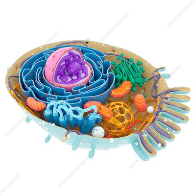 Cell structure, illustration