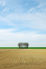 Trees growing at edge of dry field