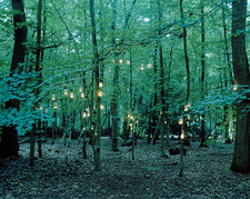 Lanterns hanging from trees in forest