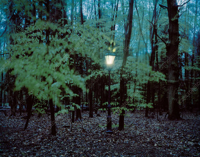 Lantern hanging from trees in forest