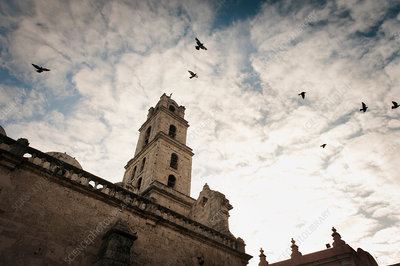 Birds flying over cathedral tower