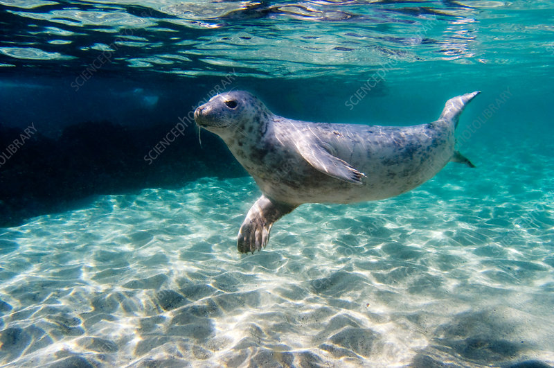 Swimming - Stock Image - P930/0157 - Science Photo Library