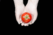 Gloved hands holding tomato