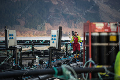 Worker on salmon farm in rural lake