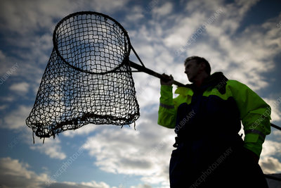 Worker with fishing net at salmon farm