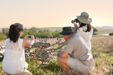 People photographing wildlife on safari, South Africa