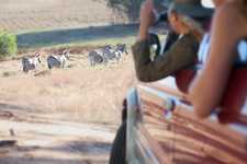 Women looking at zebras from vehicle, South Africa
