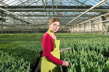 Woman in tulip greenhouse with digital tablet