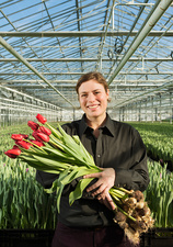 Woman holding bunch of red tulips in greenhouse