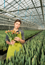 Woman in tulip greenhouse holding bunch of pink tulips